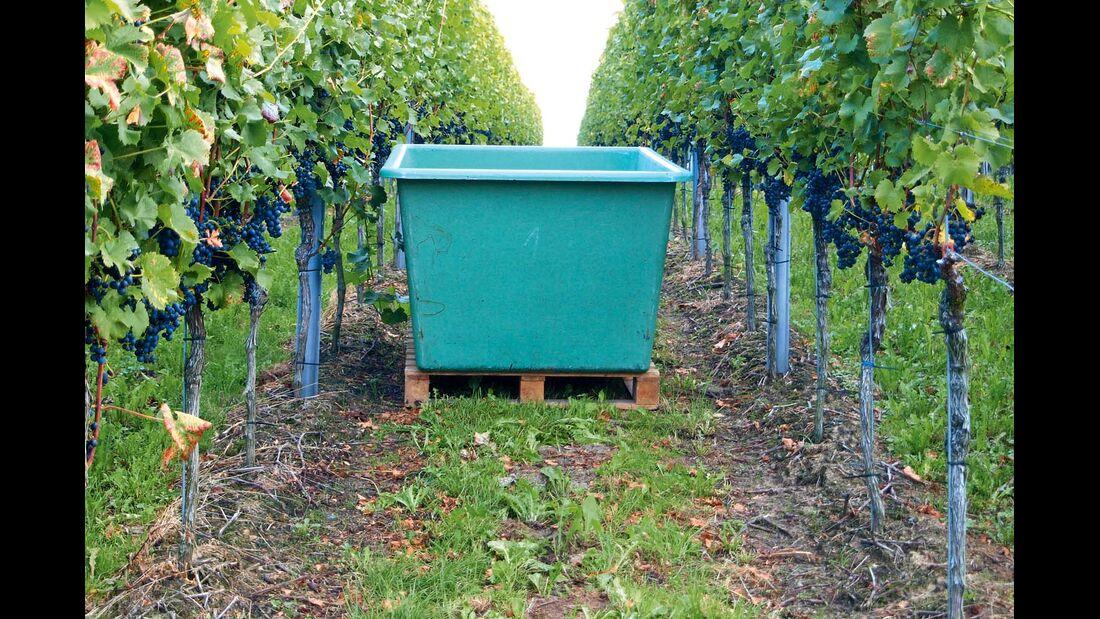 Weit im Norden Hessens hat das Weinbaugebiet Rheingau seinen letzten Ausläufer.