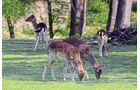 Wildpark mit großem Rotwildgehege