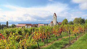 Wohnmobil-Tipp: Hagnau am Bodensee