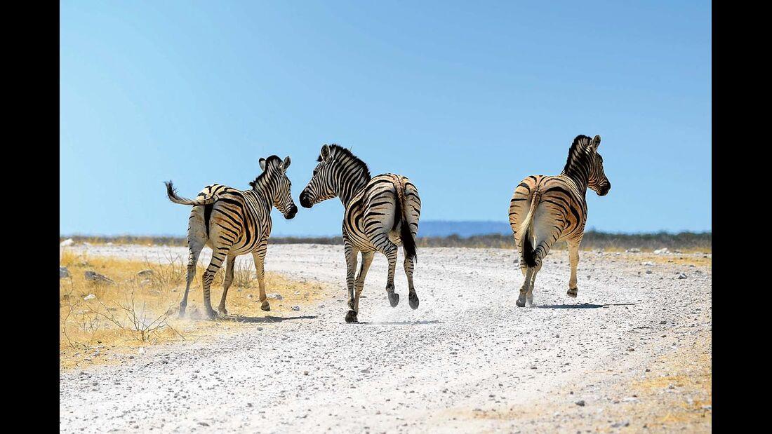 Zebras in der Etosha-Pfanne