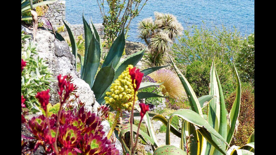 mediterrane Vegetation in Südengland